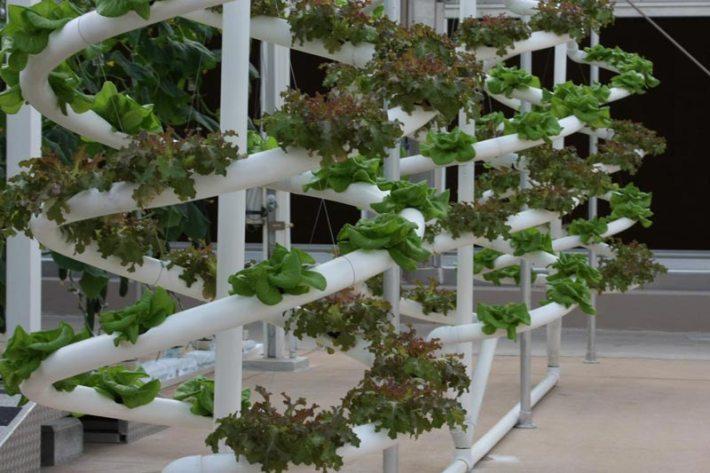 DIY Vertical PVC Planter (2)