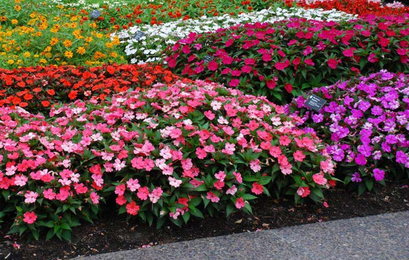 Quiet Corner:Easy Annual Plants That Bloom All Summer Long