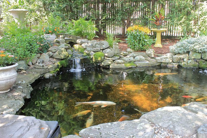 Quiet corner inspiring backyard pond ideas quiet corner for Outdoor goldfish pond ideas