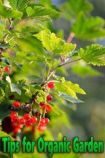 Tips for Organic Garden