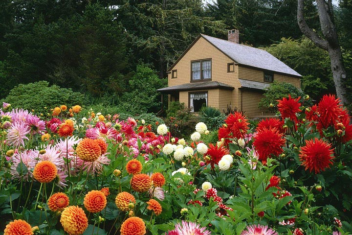 Choosing Perfect Landscaping Plants for Outdoors - Quiet Corner