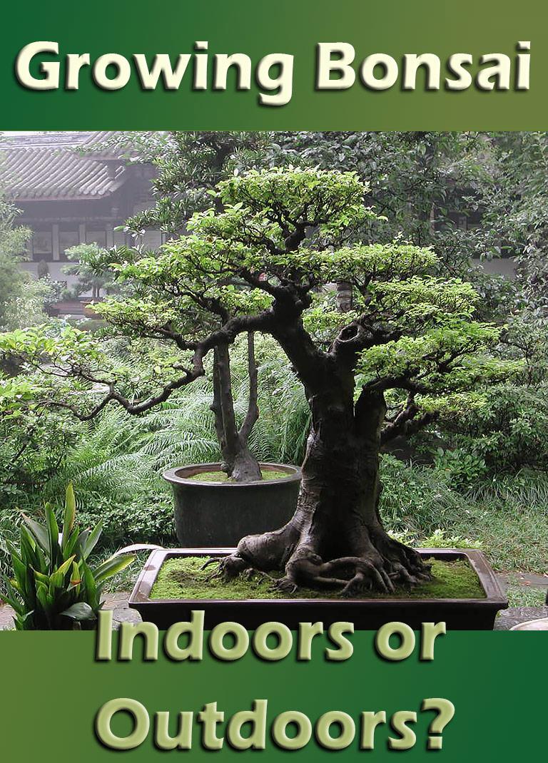 Growing Bonsai - Indoors or Outdoors? - Quiet Corner
