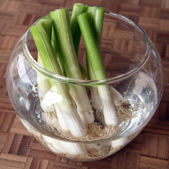 10 Vegetables You Re Grow From Kitchen Scraps: Quiet Corner:10 Plants You Can Re-Grow From Vegetable