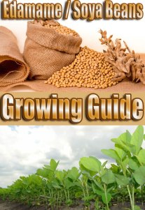 Edamame Soya Beans - Growing Guide