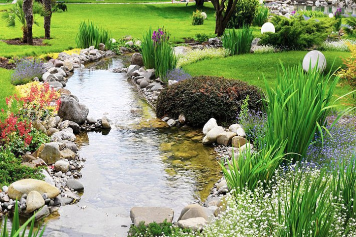 Planting Combination for the Water Garden