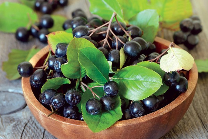 Aronia - Medicinal Properties And Health Effects