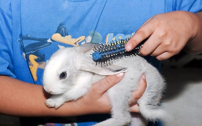 How To Properly Care for Your Rabbit