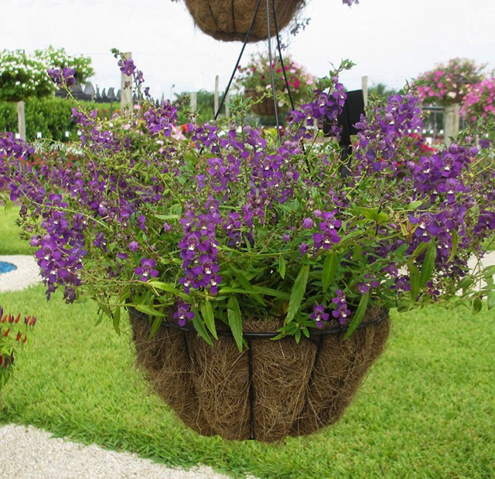 Quiet Corner:How To Plant Hanging Baskets And Containers