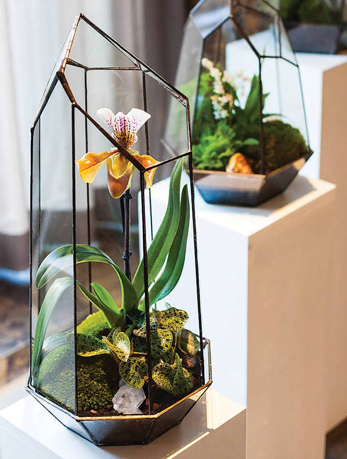 Everything You Need to Know About Making Terrarium - Quiet Corner