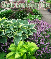 Shade Gardening Tips