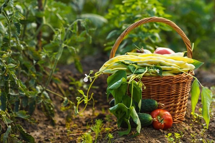 Garden Almanac - August Gardening Tips and Tasks