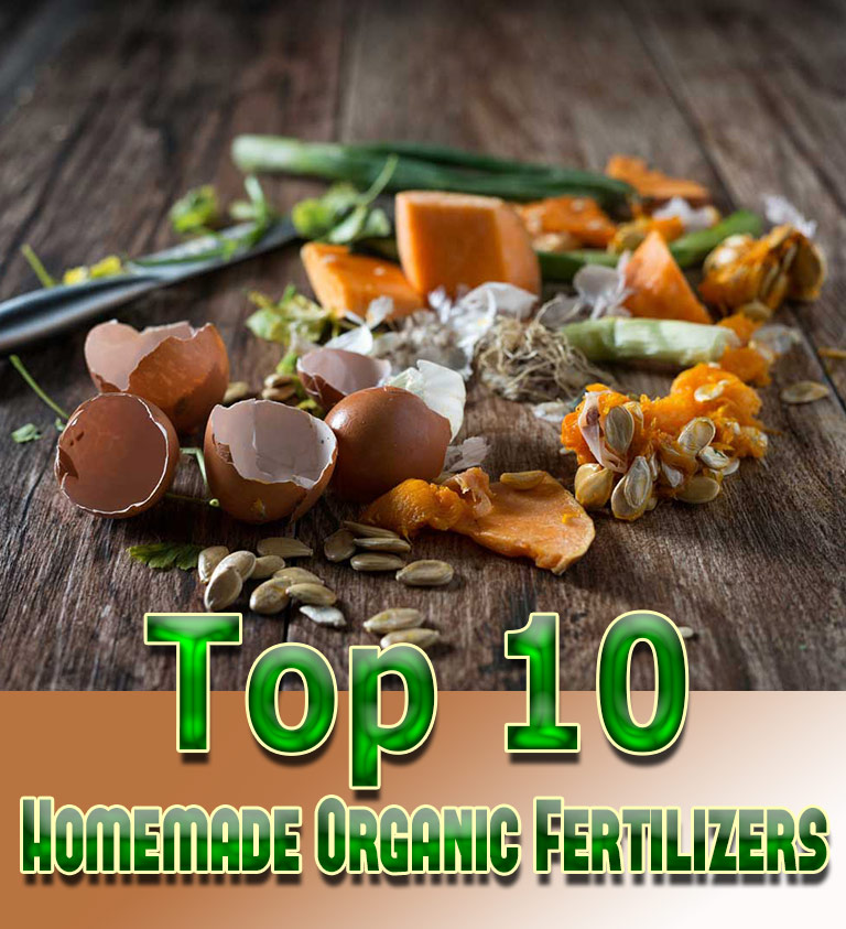 Top 10 Homemade Organic Fertilizers - Quiet Corner
