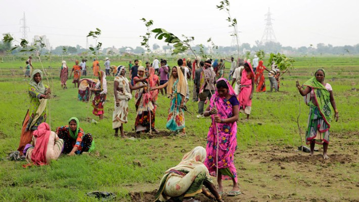 India Has Planted Nearly 50 Million Trees In 24 Hours