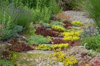 Ground Covers: Carpet Sunny Locations with Sedum - Quiet ...