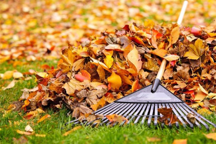 How To Prepare Lawn For Fall
