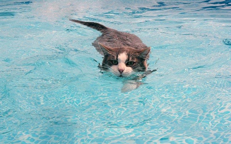 Quiet Corner Is It Chlorine In Pools Safe For Pets Quiet Corner