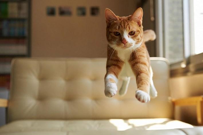 Funny Cat Video – Ninja Cat Can Bounce Off Walls