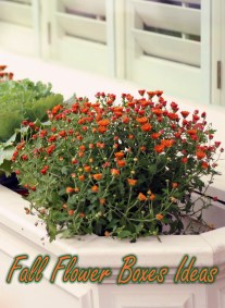 Outdoor Decoration – Fall Flower Boxes Ideas