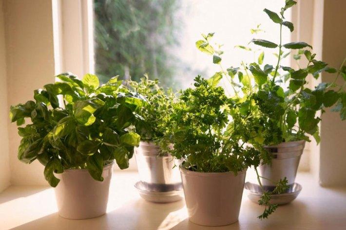 Best Herbs To Grow Indoors