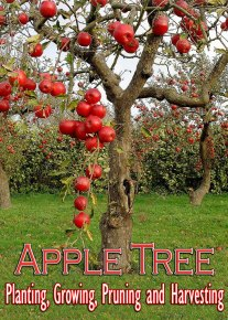 Apple Tree - Planting, Growing, Pruning and Harvesting