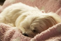 What is Your Dog Dreaming About A Harvard Psychologist Explains