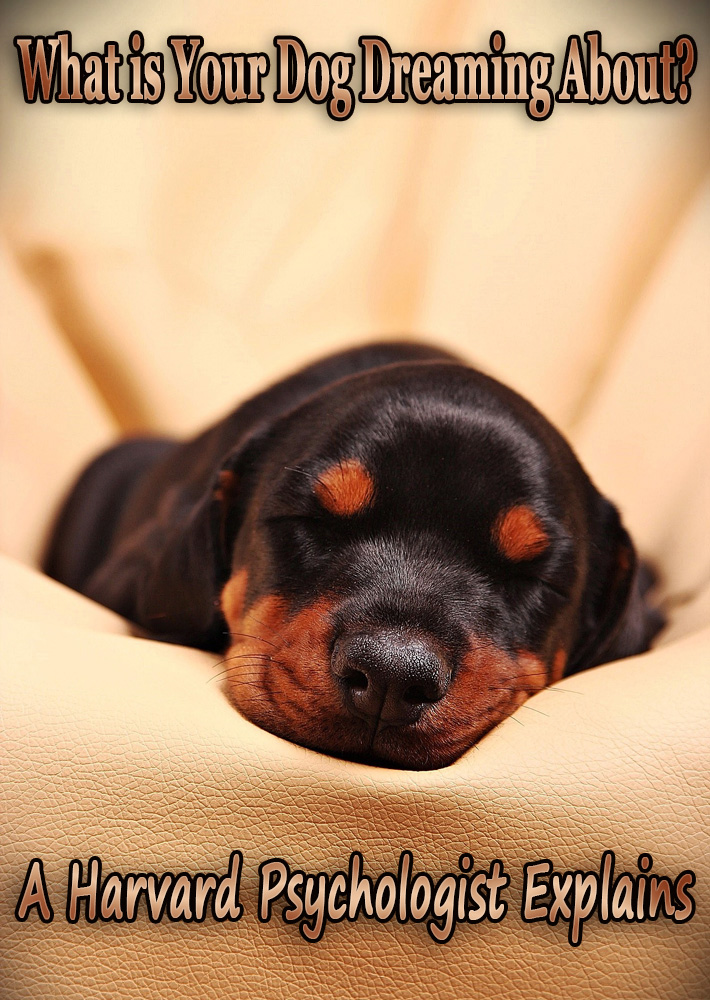 What is Your Dog Dreaming About? A Harvard Psychologist Explains