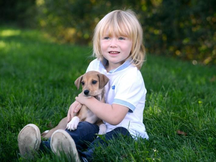 Pitbull Puppy Biting Older Dogs