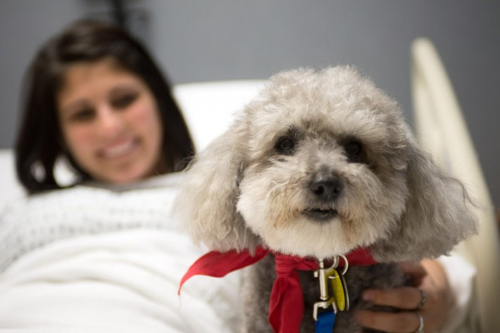 How Therapy Dogs Help Human Health