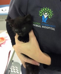 4 Year Old With Alert Helps Save This Tiny Poor Kitten