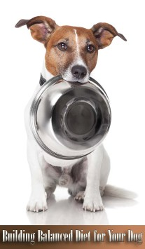 Building Balanced Diet for Your Dog
