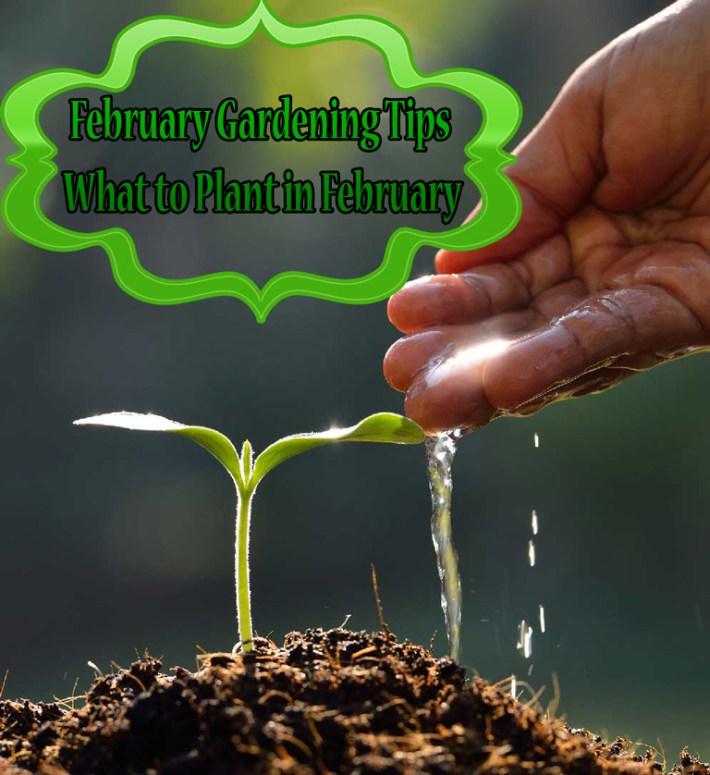 Quiet Corner Container Gardening Ideas: Quiet Corner:February Gardening Tips