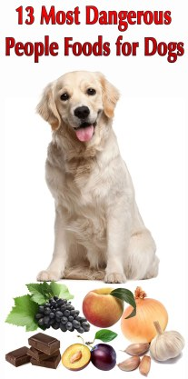 13 Most Dangerous People Foods for Dogs