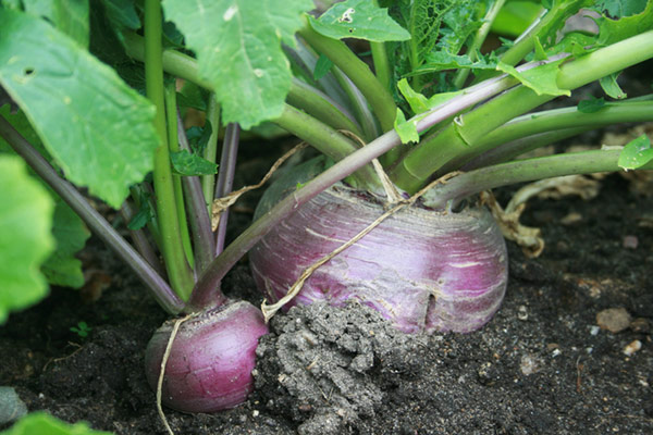 Fall Vegetable Garden: 15 Best Vegetables to Grow