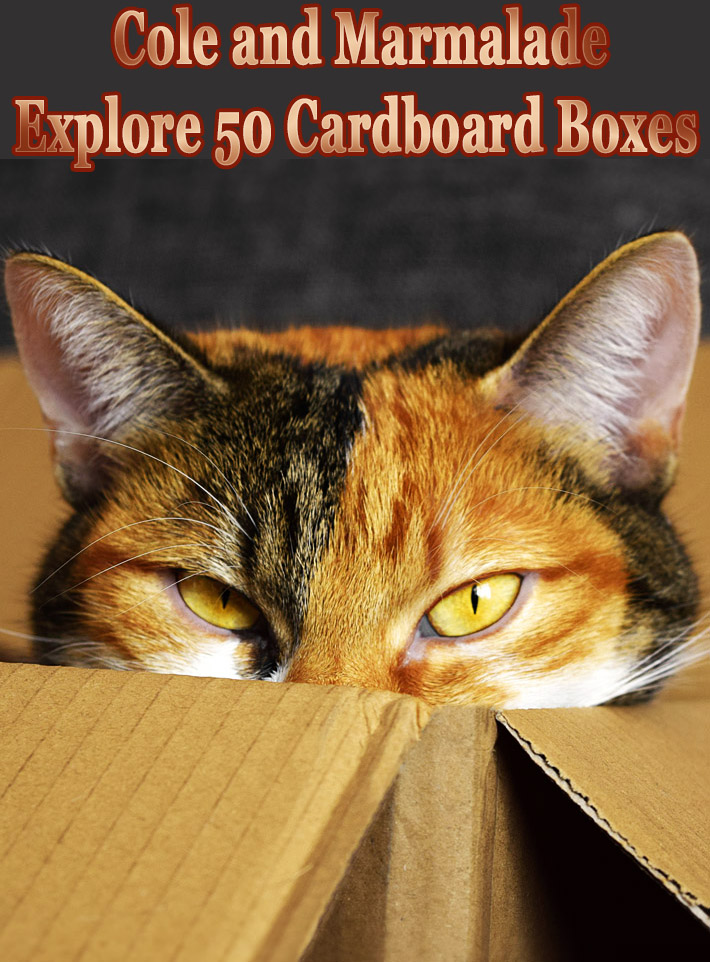 Cole and Marmalade Explore 50 Cardboard Boxes