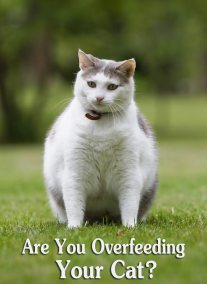 Are You Overfeeding Your Cat