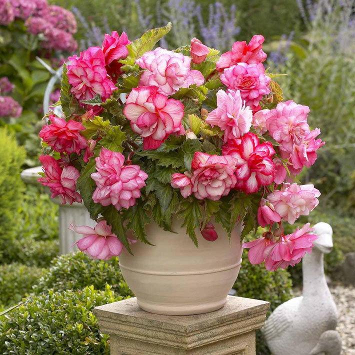 Quiet Corner Container Gardening Ideas: Quiet Corner:Best Flowers For Balcony Garden