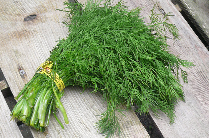 Dill – Health Benefits