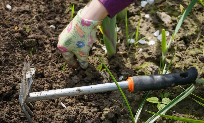 Weed Control - Tips for Vegetable Gardening