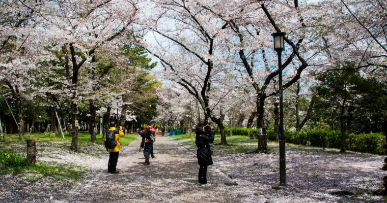 Kyoto – Ginkakuji, the Philosopher's path and a petal shower