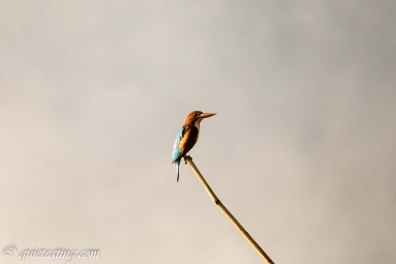 A bird posing on his branch just for me.