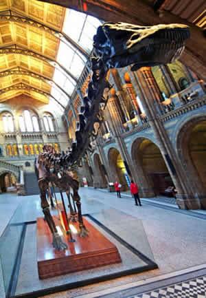 Lo scheletro del diplodoco all'ingresso del Natural History Museum