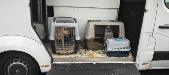 Polizia scopre traffico di cani
