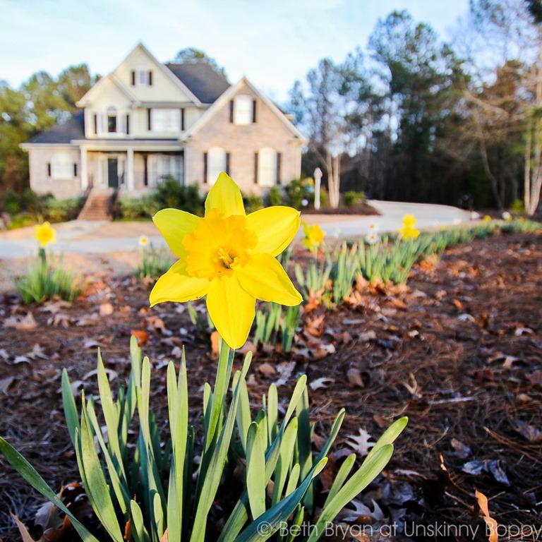 planning-spring-projects-daffodil-quinju.com