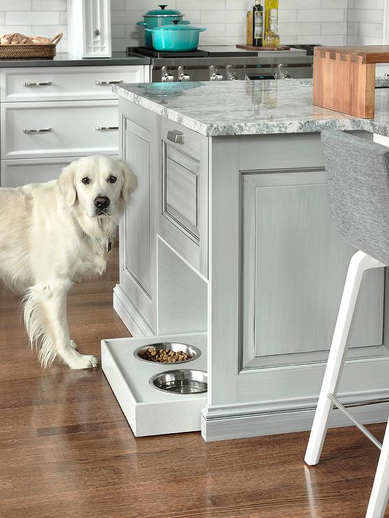 Kitchen renovation with your pet in mind - quinju.com
