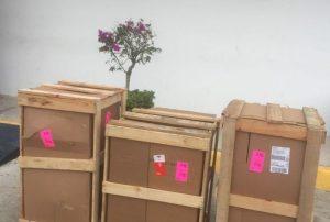 Detectan 172 kilos de marihuana en aeropuerto de Cancún