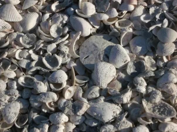 Find a Sand Dollar