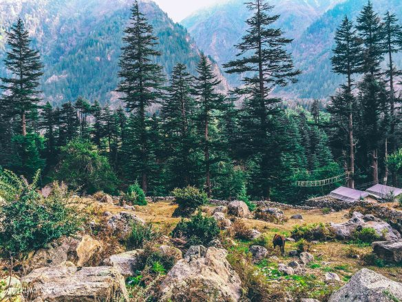Kinner camps sangla valley view