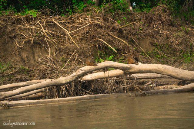 mammals chitwan national park