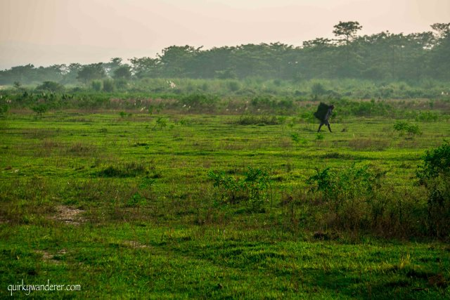 things to do in Chitwan