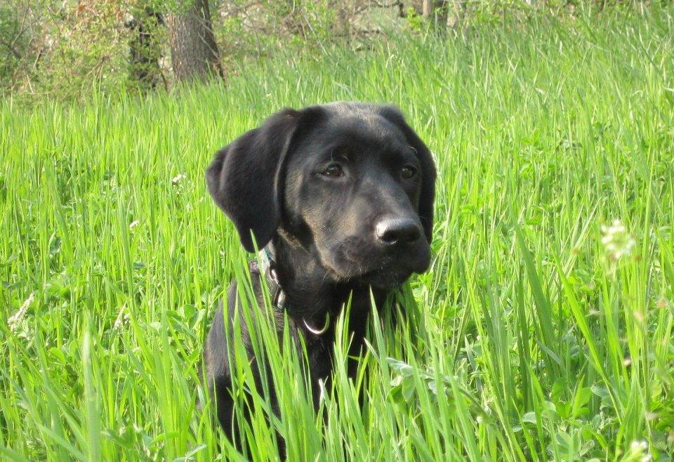 Che cos'è la Pet Therapy?